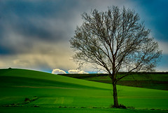 The vigilant. (hajavitolak) Tags: alava arbol arbolsolitario lonelytree paisaje paisvasco countrybasque landscape green verde naturaleza nature nubes clouds elvigilante thevigilant mirrorles sinespejo evil sony sonya7ii sonya7m2 minolta minolta28135