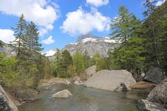 Derborence (jplana) Tags: forets montagne alpes valais derborence suisse alps