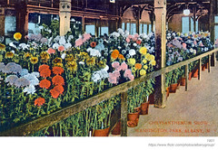 1901 washington park lakehouse chrysanthemum show (albany group archive) Tags: albany ny history postcard 1901 washington park lakehouse chrysanthemum show early 1900s old vintage photos picture photo photograph historic historical