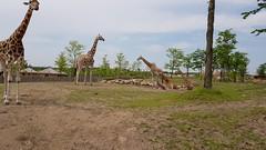 20180523_133848 (TheSlayerNL) Tags: wildlands emmen zoo dieren animals adventure wildlandsadventurezoo