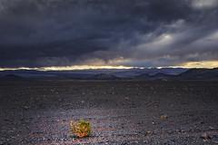 waiting for the rain (Luis_Garriga) Tags: desert stones plants sky clouds landscape mountains sunset ilce7 catamarca puna antofagasta argentina andes cordillera