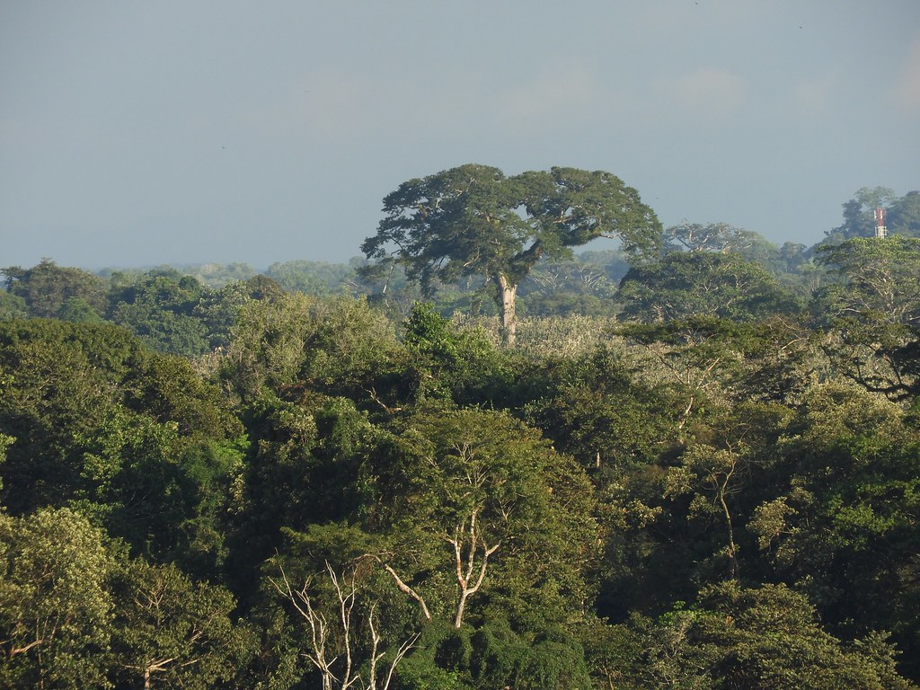 The World's most recently posted photos of ceiba and