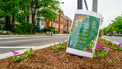 2018.05.06 Vermont Avenue, NW Garden - Work Party, Washington, DC USA 01900