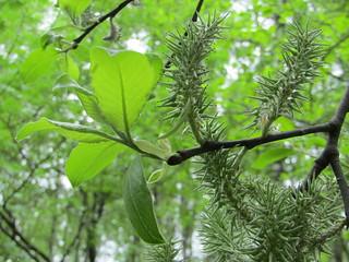 verdure of May