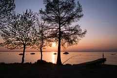 Sunset @ Lake Garda I (Marcel Cavelti) Tags: dscf7647bearb garda gardasee lake sunset trees water sun ship boat lazise italy lagodigarda
