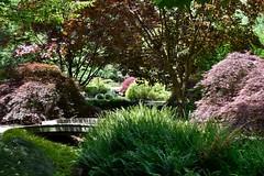 textures at Gibbs Gardens, USA (rootcrop54) Tags: gibbsgardens ballgroundgeorgia cherokeecounty georgia may2018 northgeorgia gardens