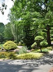 so many greens... (rootcrop54) Tags: gibbsgardens ballgroundgeorgia cherokeecounty georgia may2018 northgeorgia gardens