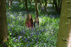 alyssia and caitlin bluebells trees (grahamdale74) Tags: bluebells 2018 alyssia caitlin chel
