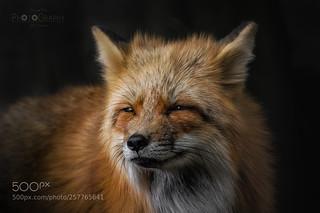 [ I love this Fox!! ]
