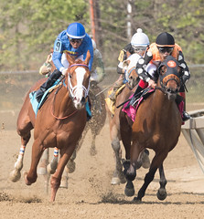 2018 Pimlico Race track (115) (maskirovka77) Tags: pimlico dirt mare race racehorse threeyearold turf yearling