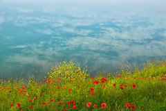 Pastels (drugodragodiego) Tags: brescia lombardia parco water lake flowers clouds sky landscape pentax pentaxk1 k1 pentaxdfa2470mmf28 hdpentaxdfa2470mmf28edsdmwr