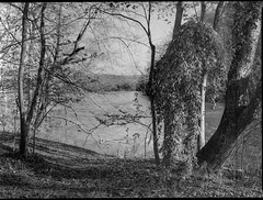 tree forms and movements, riverside, French Broad River, Biltmore Estate, Asheville, North Carolina, Mamiya 645 Pro, mamiya sekor 45mm f-2.8, Arista.Edu 200, Ilford Ilfosol 3 developer, mid April 2018 (steve aimone) Tags: trees treeforms visualrhythm riverside frenchbroadriver biltmore biltmoreestate asheville northcarolina mamiya645pro mamiyasekkor45mmf28 mamiyaprime primelens 120 film 120film mediumformat monochrome monochromatic blackandwhite landscape