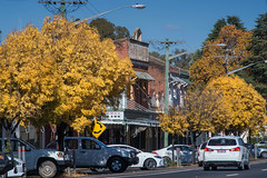 Autumn in Wellington (OzzRod (on the road again)) Tags: pentax k1 smcpentaxk200mmf4 town townscape street cars buildings heritage urban decline trees autumn colours wellington nsw singleinmay2018 uncropped