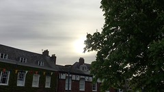 Horse Chestnut (Aesculus hippocastanum) - leaves in the sun - May 2018 (Exeter Trees UK) Tags: horse chestnut aesculus hippocastanum leaves sun may 2018