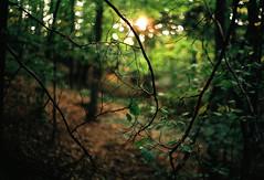 1 (kotmariusz) Tags: woods las natura analog 35mm filmphotography fujifilm superia 400 olympusom40 color branches gałęzie polska poland
