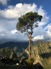 Machu Picchu Cloud Forest Tree