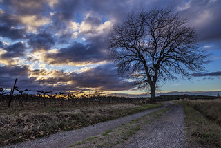 Country Path at Sunset