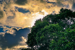 When is raining (MJ6606) Tags: spring landscape tree nature sky evening sunset branches clouds florida