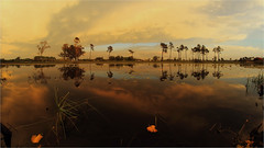 Espelhos de água (José Júlio Loureiro) Tags: reflexos espelho árvores nuvens