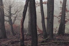 family (sedregh) Tags: nebel fog mist eifel landscape forest woods landschaft