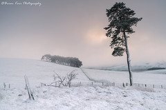 A Scottish Winterscape (.Brian Kerr Photography.) Tags: scotland scottishlandscapes scottish scotspirit scottishborders scottishlandscape snow winter wintery winterscape sonyuk formatthitech firecrest scotspines trees vanguarduk a7rii zeiss photography outdoor outdoorphotography opoty nature naturallandscape natural briankerrphotography briankerrphoto sunrise morning cold coldmorning frozen frost mistymorning