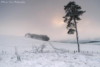 A Scottish Winterscape