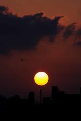DSC_4868 (rajashekarhk) Tags: sunset silhouette colours chennai clouds southindia sky sholiganallurmarsh sholiganallur tourism tamilnadu beauty birds birdphotography rajashekar red hkr nikon nature