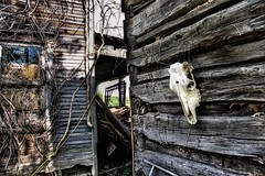 Behind the Shed (Pittsburgh Cam Miller) Tags: ruraldecay abandonedfarm countryside ruralamerica westernpennsylvania