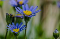 La stagione dell'amore (stefanonikon1) Tags: nikon tamronsp90macro macro d7000 colore fiori