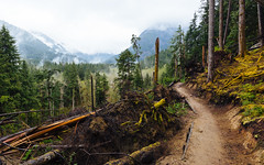 Somewhere... I Wanna Go There With You (John Westrock) Tags: nature trail path trees mountains clouds overcast pacificnorthwest washington canoneos5dmarkiii canonef1635mmf4lis johnwestrock