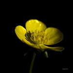 Bouton jaune thumbnail