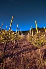Vine Field near the Mosel Loop (1durch0) Tags: field mosel moselschleife night sky stars vine vino wein atmosphere sterne blau blue germany deutschland stimmung