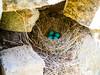 Birds nest with eggs (brooklandsspeedway) Tags: lockridge alburtis pennsylvania lehighcounty lehighvalley