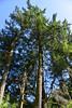 Orcas Island (Shannon L. Castor) Tags: orcasisland water nature washington trees sky landscape deer