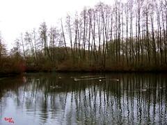 La Chaine des Lacs (rocco944) Tags: rocco944 villeneuvedascq france lechainedeslacs canonpowershota2200 flickrunitedaward