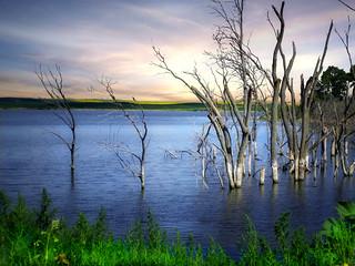 Prairie pond 24