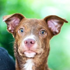 East19May20186.jpg (fredstrobel) Tags: dogs pawsatanta atlanta usa animals ga pets places pawsdogs decatur georgia unitedstates us