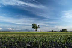 Cambus - 10 May 2018 - 05.jpg (ibriphotos) Tags: dogwalk summer warm sunset river benledi cambus wallacemonument riverforth onetree spring orchardfarm aroundtheforth clackmannanshire evening goldenhour sky sunsets