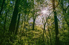 some sun for a rainy day (RubyT (I come here for cameraderie!)) Tags: agfavista400expired pentaxpz1p fa2490 film analog landscape starburst sunflare lensflare forest woods trees pentax pentaxart