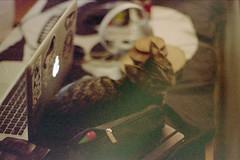 (Just A Stray Cat) Tags: kodak max 400 cat cats kitty kittens kitties gate apple macbook mac 50mm nikon f501 n2020 35mm 35 mm film analog analogue