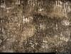 20170630_09 Scratch marks on wall of gas chamber (grey version) | Auschwitz concentration camp, Poland (ratexla) Tags: ratexlasinterrailtrip2017 interrail auschwitz 30jun2017 2017 canonpowershotsx50hs interrailing eurail eurailing tågluff tågluffa tågluffning travel travelling traveling journey epic europe earth tellus photophotospicturepicturesimageimagesfotofotonbildbilder wanderlust vacation holiday semester trip backpacking tågresatågresor resaresor europaeuropean sommar summer ontheroad oświęcim poland polska auschwitzconcentrationcamp concentrationcamp ww2 secondworldwar war nazism racism bigotry history violence museum theholocaust förintelsen koncentrationsläger execution auschwitzi gaschamber gaschambers gaskammare homogeneous