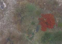 View looking straight down at our pond and yard. (JamesLofton) Tags: drone fog fall ariel pond yard oak trees dji phantom