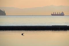 Peaceful evening (Reva G) Tags: beach sunset ambleside northshore westvancouver heron bird reflection ship horizon fade ocean sea water burrardinlet bc vancouver evening dusk