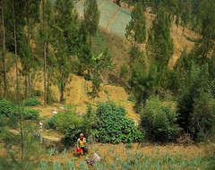 INDONESIEN, Java, Obst- und Gemüseanbau an den Hängen des  Tengger-Vulkanmassivs, 17506/10083 (roba66) Tags: urlaub reisen travel explore voyages visit tourism roba66 asien asia inselstaat java geüseanbau landwirtschft lavaerde hang terassen landschaft landscape paisaje nature natur naturalezza baum bäume tree trees arbes arboles alberi indonesien ondonesia