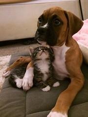 My gf just got a cat (sandiagadeni) Tags: dog puppy cute puppies