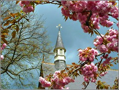 Framed by Blossom ... (** Janets Photos **) Tags: uk hull eastyorkshire churches towers framedphotos blossom