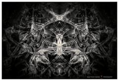 Synaptic (GP Camera) Tags: nikond80 nikonafsdx18105mmf3556gedvr composition composizione details dettagli abstract astratto symmetry simmetria leaves foglie doubleexposure doppiaesposizione textures trame shades sfumature vignetting darkbackground sfondoscuro bw biancoenero monochrome monocromo whiteframe cornicebianca italy italia piemonte monferrato darktable gimp opensource freesoftware softwarelibero digitalprocessing elaborazionedigitale