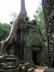 Ta Prohm (Oleg Nomad) Tags: камбоджа сиемрип ангкор храм байон кхмерский руины cambodia siemreap angkor bayon temple ruins asia travel