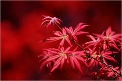 sfumature naturali (GiophotoArt) Tags: natura colori sfumature primavera fiori