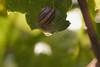 _MG_1829_C (grzegorz_63) Tags: snail makro macro leaves flora faun nature outside canon70d